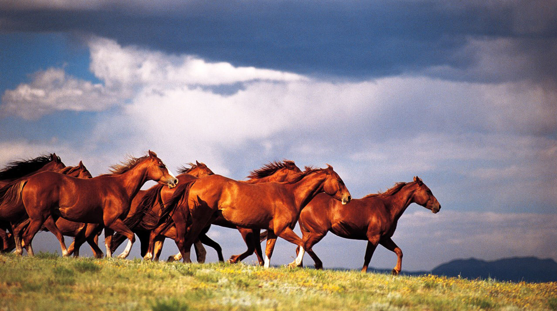 Horse Industry