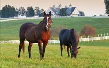 Horse Industry Mats